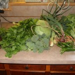 Should I Can or Freeze my Garden Harvest?