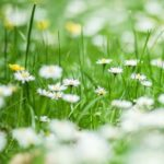 5 Natural Ways to Kill Weeds